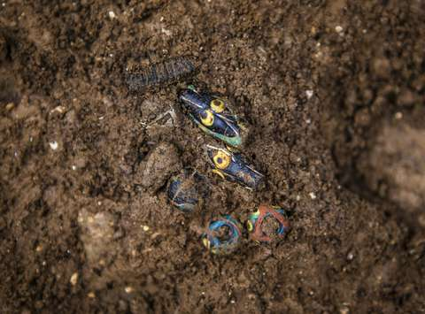 Multicoloured glass beads discovered in one of the remains of 4th-century graves.